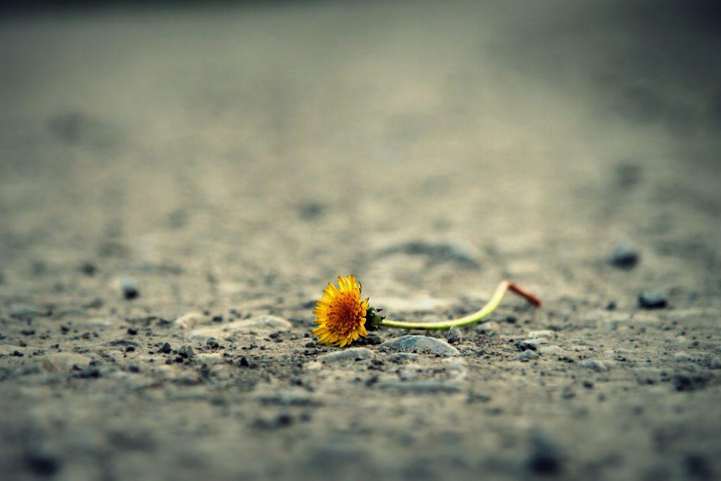 flower-1812470_1920